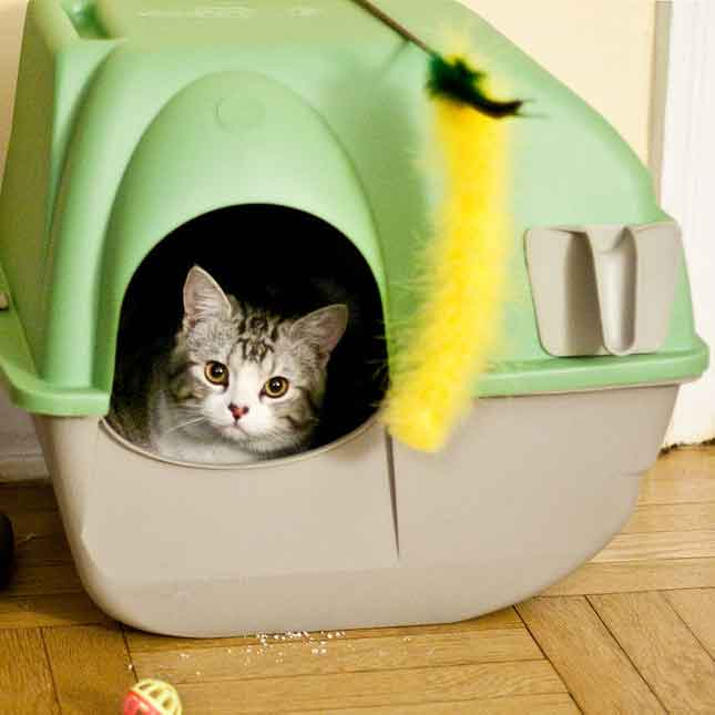 What Is The Best Cat Litter To Use?