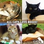 PurrSit Cat Care Boxes